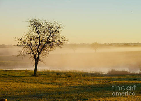 Misty Morning by Diana Cox