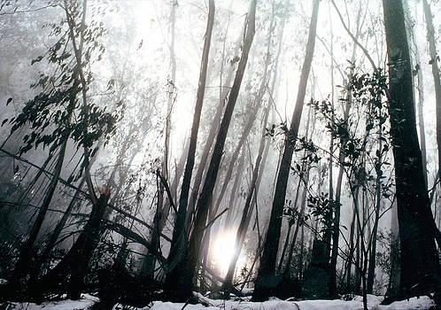Misty Morning on Mt Buller by Roz McQuillan