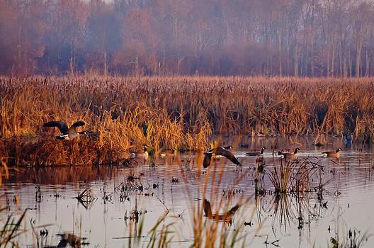 Christine Kapler - Misty morning over Cranberry Marsh
