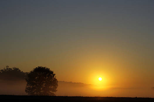 Misty Morning Sunrise by Barry Jones