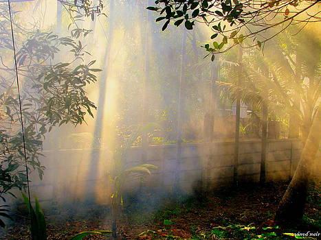 Misty Mornings by Vinod Nair