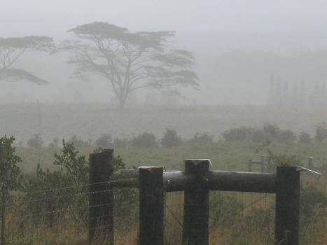 Misty Upcountry Morning by Ron Holiday Broomell