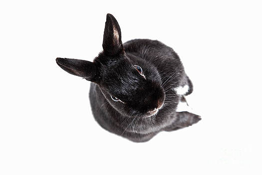 Katka Pruskova - Mitzi Black Rabbit