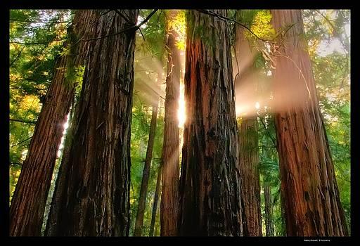 Miur Woods by Michael Thoms