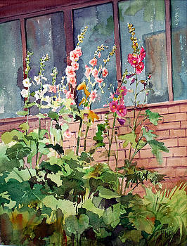 Mixed Hollyhock by Peter Sit