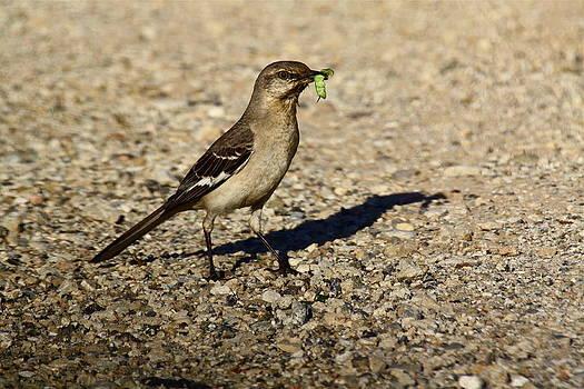 Mockingbird Meal by Diana Hatcher
