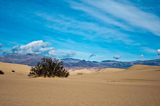 Mojave Memories by Tone Garot