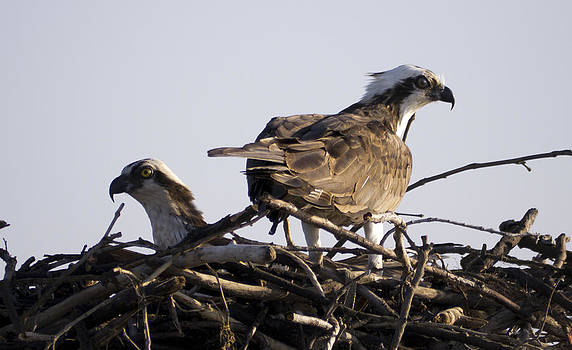 Mom and Dad by Bob Lennox