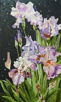 Mom's Night Iris by Mickey Krause