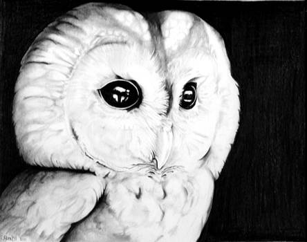 Mom's owl by Sharon Branch