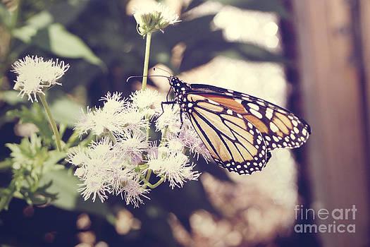 Monarch Beauty 2 by Melina Geil