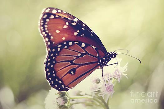 Monarch Beauty by Melina Geil