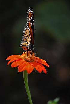 Michelle Cruz - Monarch frontal View