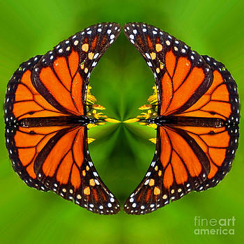 Monarch Mirror  by Whispering Feather Gallery