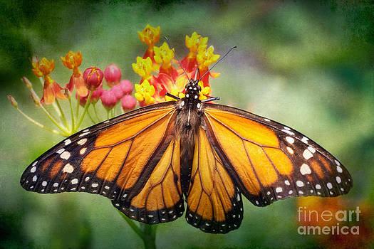 Monarch Three by Susan Isakson