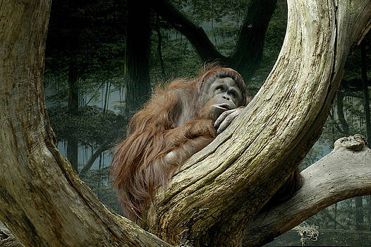 Monkey dreams by Ferrara Claude