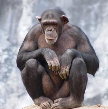 Monkey from Mountains by Meeli Sonn