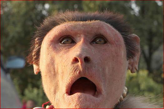 Monkey by Fuad Azmat
