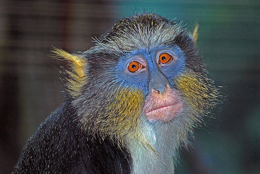 Michelle Cruz - Monkey in Color