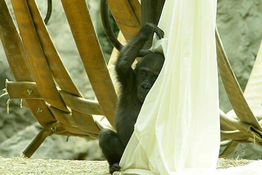Monkey Play by Beverly Kobee
