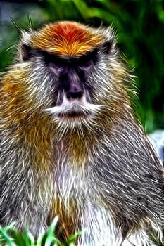 Monkey by Ratan Sonal