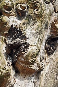 Kantilal Patel - Monkeys in the Tree