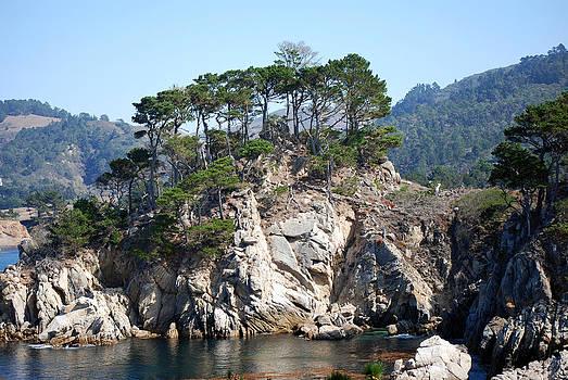 Harvey Barrison - Monterey Cypres
