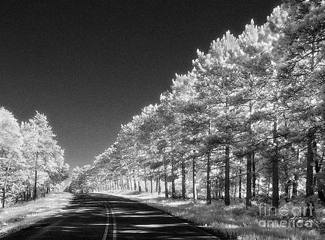 Jeff Holbrook - Monument Road