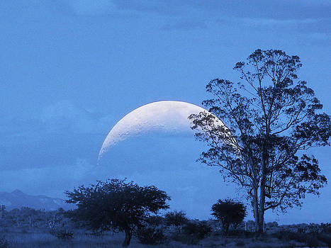 Moon and tree by Jesus Nicolas Castanon