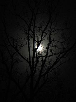 Moon Branches by Jennifer Compton