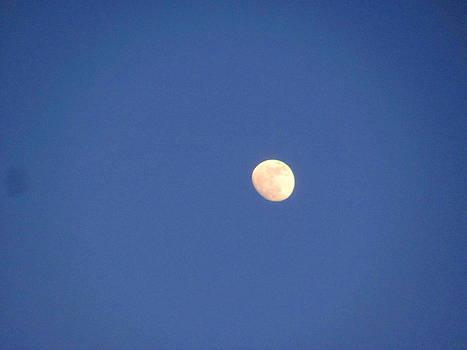 Moon in Daylight by Amy Bradley