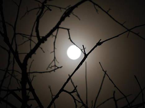 Moon limbs 2 by Shane Brumfield