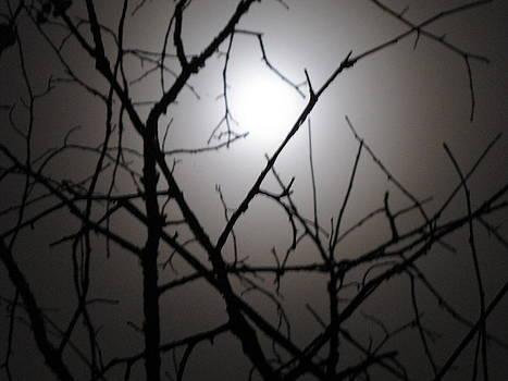 Moon Limbs by Shane Brumfield