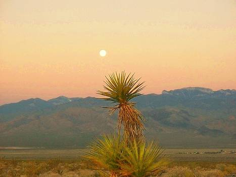 Moon Sets as Sun Rises by Jonathan Barnes