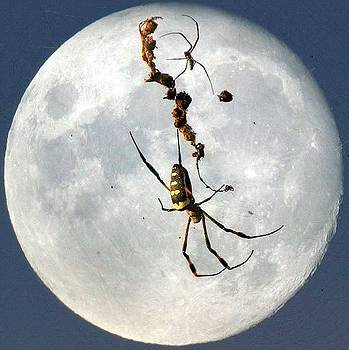 Moon Spider by Patrick Anderson