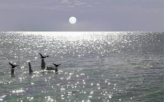 Tony Rodriguez - Moondance