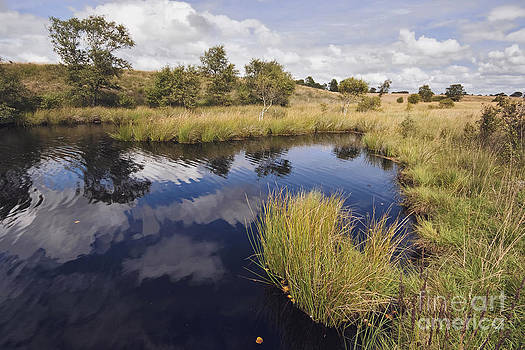Moor Lake by Wedigo Ferchland
