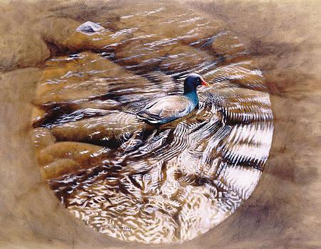 Moorhen Creek Tondo by Michael Oberhofer