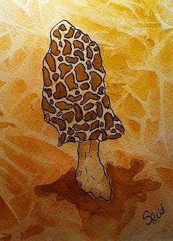 Morel by Stephanie Reid