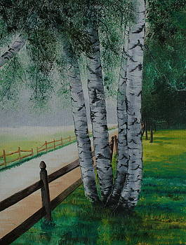 Morning Birch Tree's by Christopher Keeler Doolin
