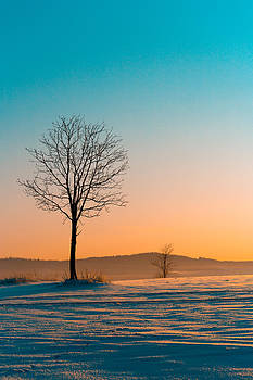 Morning by Daniel Kulinski