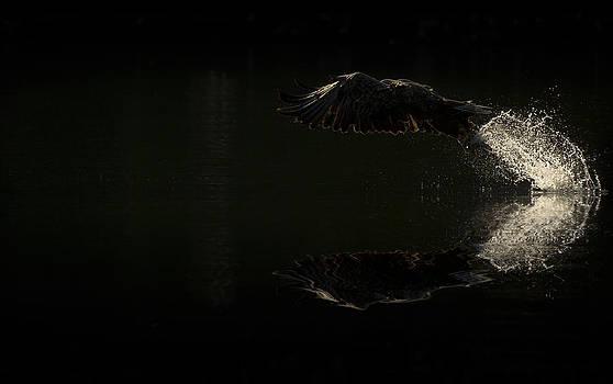 Morning Dip by Andy Astbury