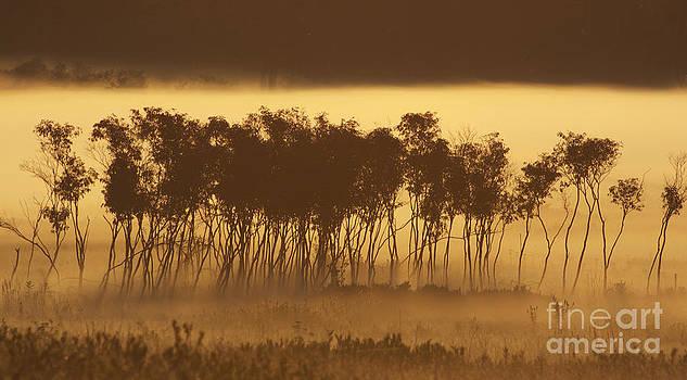 Chuck Smith - Morning Fog - 5015