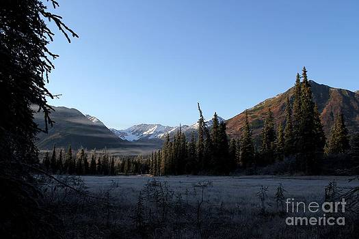 Morning Frost on the Kenai Peninsula by Theresa Willingham