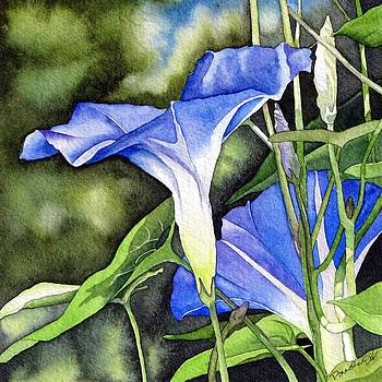 Morning Glory by Brenda Jiral