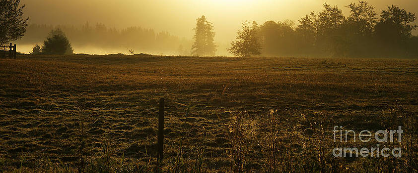 Morning Glow by Terrie Taylor
