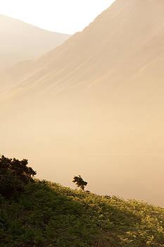 Svetlana Sewell - Morning Haze
