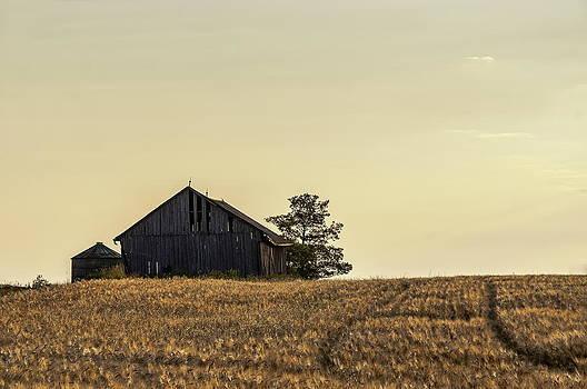 Alan Norsworthy - Morning Light on Wheatfield