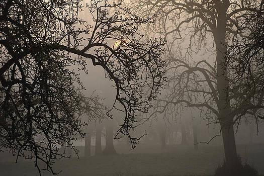 Morning Mist by Erik Tanghe