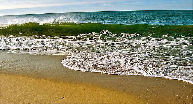 Morning Shore by Susan Elise Shiebler